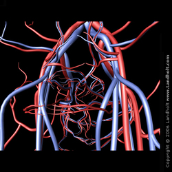 Arteries_veins_02